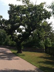 Cleveland Tree Su4